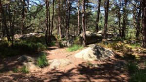 Forêt de Fontainebleau - Novembre 2016